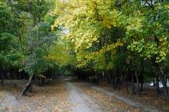 Forest Path dans l'automne Photo stock
