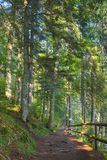 Forest path in dappled light. Wooden fence. low angle view. beautiful summer scenery royalty free stock image