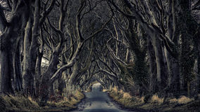 Free Forest Path Dark Hedges Royalty Free Stock Photo - 95259155