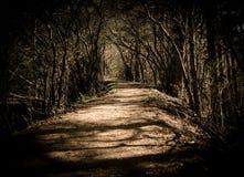 Forest Path de doblez fotos de archivo libres de regalías