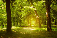 Forest path. Through deep magic forest stock images