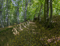 Forest path in early autumn Royalty Free Stock Photography