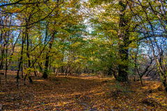 Forest path on edge of forest, autumn, Slovakia Stock Images