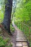 Forest Path en bois photographie stock libre de droits