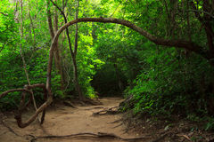 Forest path in Erawan national park Stock Photo