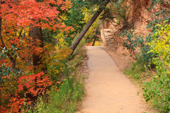Forest Path in the Fall Royalty Free Stock Photo