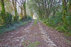Forest path Stock Images