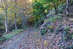 Forest path Stock Photography