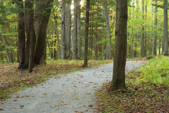 Forest path fall landscape trees tranquil scene Stock Photos