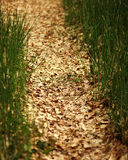 Forest path of fallen leaves in the middle of green grass Stock Photos
