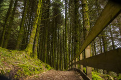 Forest path. In th the pine forest royalty free stock image