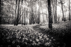 Forest path between flowers Royalty Free Stock Images