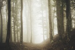 Forest path through the fog Royalty Free Stock Photography