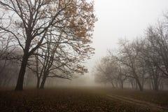 Forest path at foggy autumn morning, Kosutnjak forest, Belgrade Stock Image