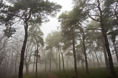Forest path at foggy autumn morning, Kosutnjak forest, Belgrade Royalty Free Stock Photos