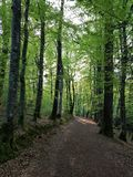 Forest path france stock images