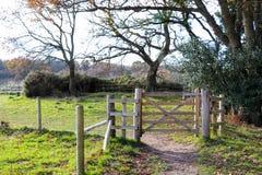 Forest Path Gate fotografia stock libera da diritti