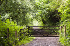 Forest path with gate. A wooden gate on path leading through a green forest in English countryside, Dartmoor, Devon, England Royalty Free Stock Photo