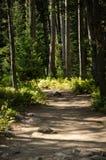 Forest Path, gebrochenes Sonnenlicht Stockbild