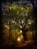 Forest path with giant tree in autumn Royalty Free Stock Photo