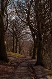 A forest path in Glasgow Queens Park stock images