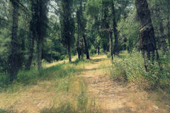 Forest. Path into the forest, in greece stock images