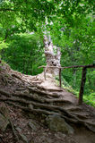 Forest path with handrails. From the roots of trees royalty free stock image
