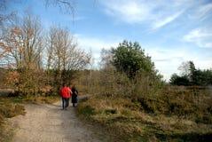 Forest path with hikers. Forest path with hikers, people on autumn, fall day in belgium Stock Photo