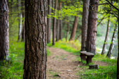 Forest path for hiking Royalty Free Stock Image