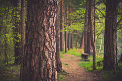 Forest path for hiking Royalty Free Stock Photo