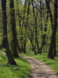 Forest Path. Hiking Path Winding through Spring Forest with Fresh Green Leaves Stock Images