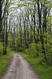 Forest Path. Hiking Path Winding through Spring Forest with Fresh Green Leaves Stock Photo