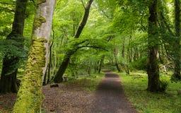 Forest Path im Frühjahr, Nationalpark Killarneys, Grafschaft Kerry, Irland Stockfotografie