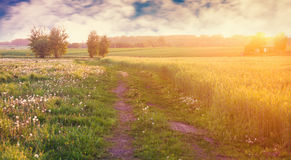 Forest path Royalty Free Stock Images