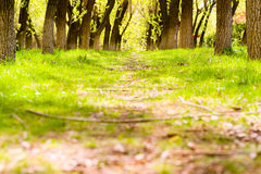 Forest path landscape Stock Photography
