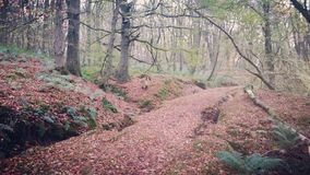 Forest path, Lanfine estate in the Autumn stock image
