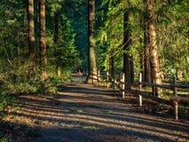 Forest Path Late Afternoon fotografía de archivo libre de regalías