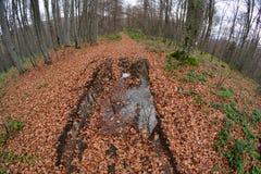 Forest path through late autumn beech forest Stock Photos