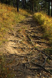 Forest path. Leading to mount isolated on a background of yellow grass Stock Photography