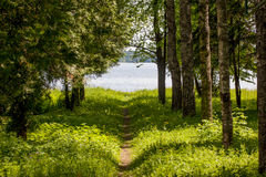 Forest path leading to the water Royalty Free Stock Photography