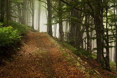 Forest path leading up to the mountain Royalty Free Stock Images