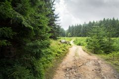 Forest path, lined by coniferous trees stock image