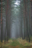 Forest Path, Lithuania. A well-worn path leads into foggy woods in Western Lithuania.  The Curonian Peninsula Royalty Free Stock Photos