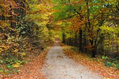Forest path. Long forest path in autumn Royalty Free Stock Images