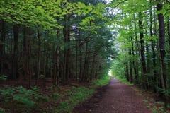 Forest Path mágico a iluminar-se Imagens de Stock