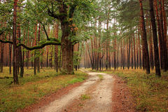 Forest Path Through Magic Forest Fotografia Stock Libera da Diritti
