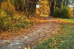Forest path with many fallen leaves, autumn landscape. Fall in the old park. Walking, mood, nostalgia concept. Forest path with many fallen leaves, fall stock image