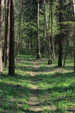 Forest. A path in the forest in mid-spring Stock Photography
