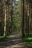 Forest. A path in the forest in mid-spring Royalty Free Stock Photos