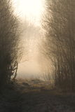 Forest path  in  misty morning Royalty Free Stock Photography